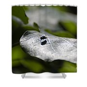 Fly On A Green Leaf Shower Curtain