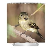 Flycatcher On A Branch Shower Curtain