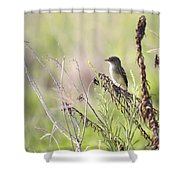 Flycatcher On A Twig Shower Curtain