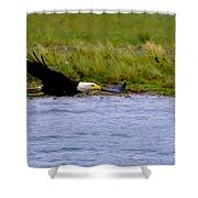 Flying Bald Eagle Shower Curtain