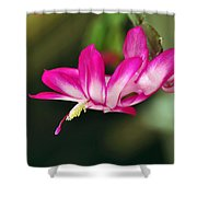 Flying Cactus Flower Shower Curtain