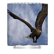 Flying European Sea Eagle I Shower Curtain