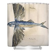 Flying-fish, 1585 Shower Curtain