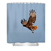 Flying Red Tail 204-2 Shower Curtain