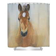 Foal Study Shower Curtain