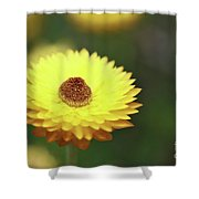 Focal Point Shower Curtain