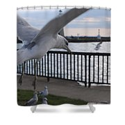 Focused Gull Shower Curtain