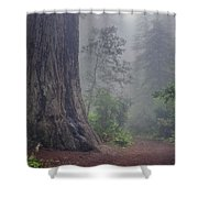 Fog And Redwoods Shower Curtain
