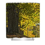 Foliage At The Cemetery Shower Curtain