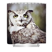 Followed Owl Shower Curtain