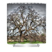 Folsom Oak Tree Shower Curtain