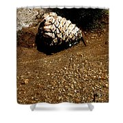Fools Gold And Pine Cone Shower Curtain