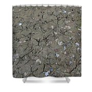 Foot Prints In The Mud Shower Curtain