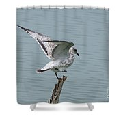 Foot Up Wing Test Shower Curtain