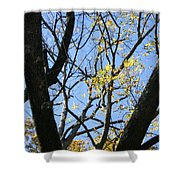 For The Trees Shower Curtain