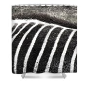 Foraging Spots  Shower Curtain