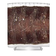 Forensic Helpers, Black Blow Fly Shower Curtain