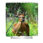Forest Buck Shower Curtain