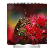 Forest Bug - Pentatoma Rufipes Shower Curtain