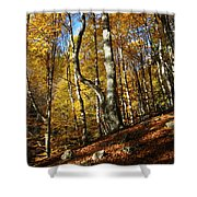 Forest Fall Colors 4 Shower Curtain