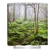 Forest Ferns On A Foggy Morning Shower Curtain