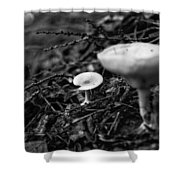 Forest Floor 1 Shower Curtain by Nathan Larson