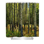 Forest Floor In Autumn, Bow Valley Shower Curtain