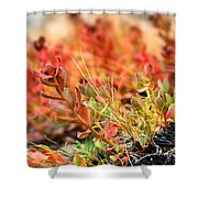 Forest Folaige Shower Curtain