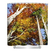 Forest In Autumn Bavaria Germany Shower Curtain