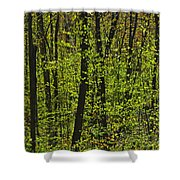 Forest In Spring Foliage, Six Mile Lake Shower Curtain