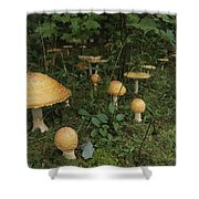 Forest Mushrooms Sprout Shower Curtain