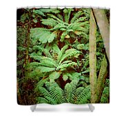 Forest Of Ferns Shower Curtain