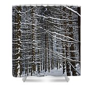 Forest Of Marburg In Winter Shower Curtain