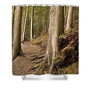 Forest Pathway, Whistler, British Shower Curtain