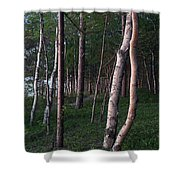 Forest, Shore Of Lake Superior Shower Curtain