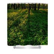 Forest Sunset Shower Curtain by Steve Gadomski
