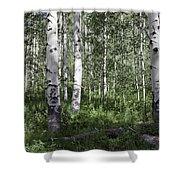 Forever Aspen Trees Shower Curtain