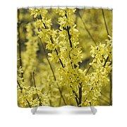 Forsythia In Full Bloom Shower Curtain