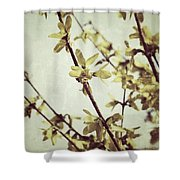 Forsythia  Shower Curtain