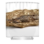 Fossilized Fish Shower Curtain