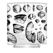 Fossilized Shells, 1844 Shower Curtain