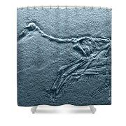Fossils - Pterosaurs Shower Curtain