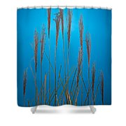 Fountain Grass In Blue Shower Curtain