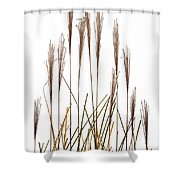 Fountain Grass In White Shower Curtain by Steve Gadomski
