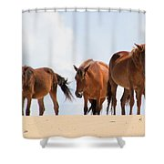 Four Wild Mustangs Shower Curtain