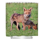 Fox And Baby Shower Curtain