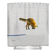 Fox Triptych Two Shower Curtain