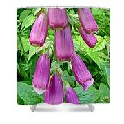 Foxglove Flower Buds - Digitalis Purpurea Shower Curtain