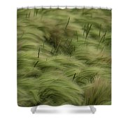 Foxtail Barley And Western Wheatgrass Shower Curtain