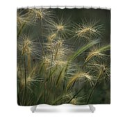 Foxtail Barley Shower Curtain